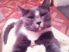 Логаева Кристина (кошка Лапка)