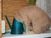 Митрофанова Виктория (кот Симба)