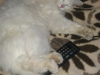 Рощина Ольга (кошка Муська)
