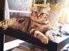 Зеленова Вероника (кошка Шера)