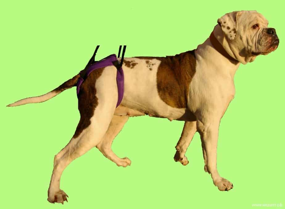 Ходунки для собак