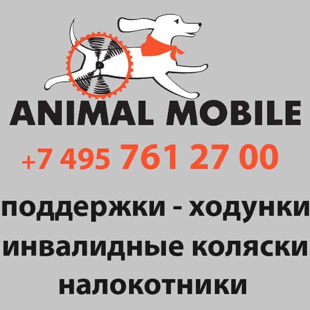 animal mobile