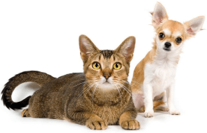 Криптоспоридиоз у собак и кошек