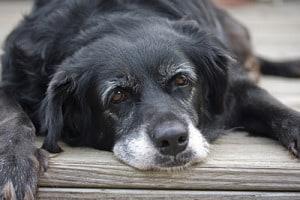 Нарушение сознания у старых кошек и собак
