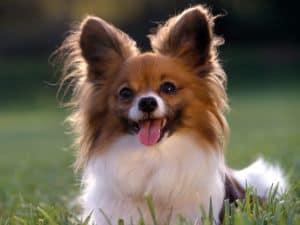 Одышка у собак