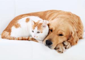 Офтальмологические проявления заболеваний у собак и кошек