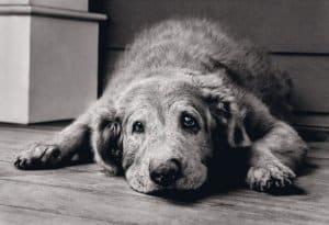 забота о здоровье пожилых  собак
