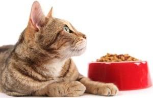 Мифы о кормлении кошек