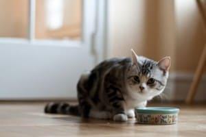 Отсутствие аппетита у собак_resize
