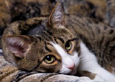 Ожоги у кошек