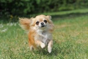 Переломы шейки бедра у собак