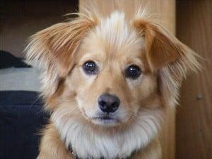 Язвенный гастрит у собак