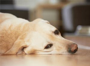 ОПН у собак