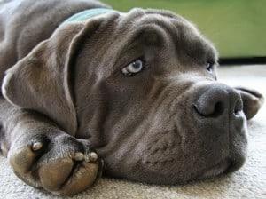 Авитаминоз у собак