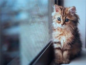 Падение кошек с высоты