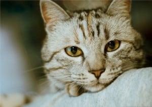 Химиотерапия у кота