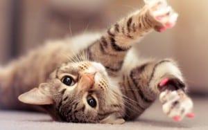 Почему кошка царапается