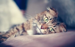 Травмы позвоночка у кошек