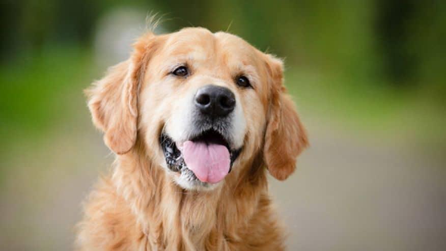 Как отучить собаку подбирать с земли
