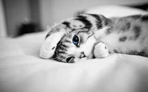 Перелом челюсти у кошки