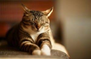 Уретростомия для котов