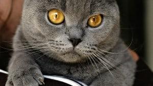 Язва желудка у кошек