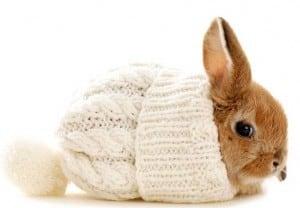 Миксоматоз кроликов