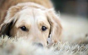 рак кожи у собак