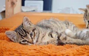 Повышенная мочевина у кошки
