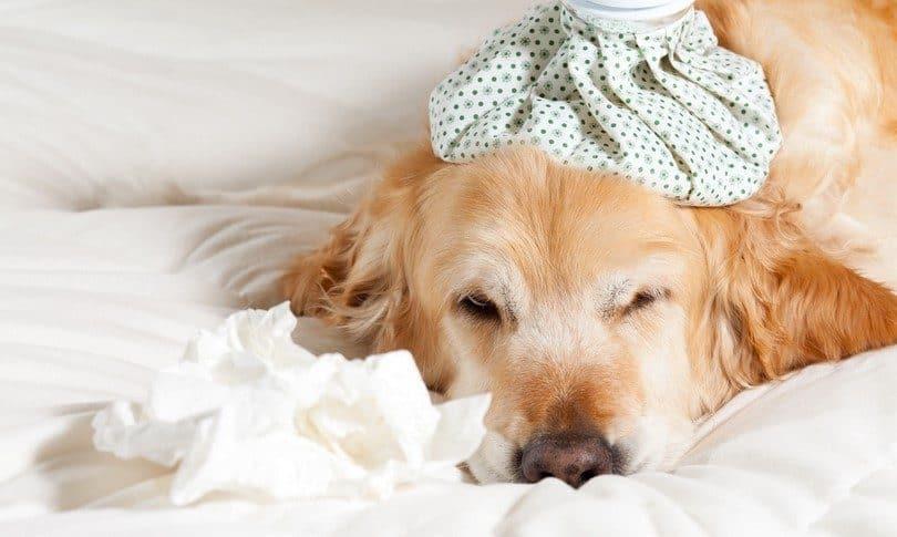 Растяжение связок у собак