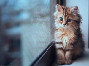 Вестибулярный синдром кошек