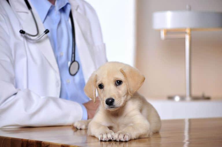 Воспаление мочевого пузыря у собак