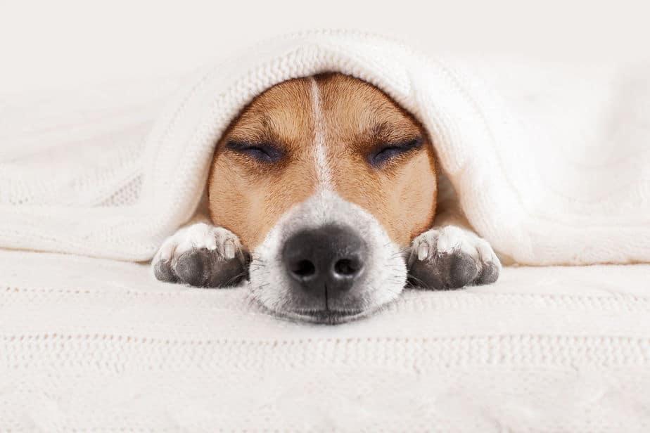 Химиотерапия у собак