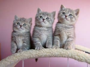Нефроз почек у кошек симптомы диагностика и лечение