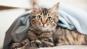 Как определить внутреннее кровотечение у кошки симптомы thumbnail