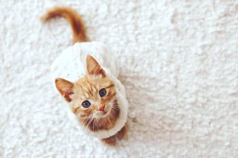 Почему кошка грызет кончик хвоста