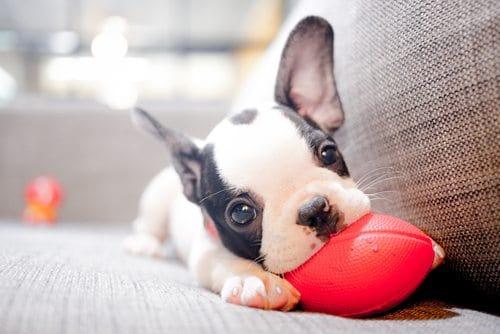 Гипертиреоз у собак