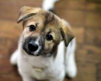 Холангит у собак