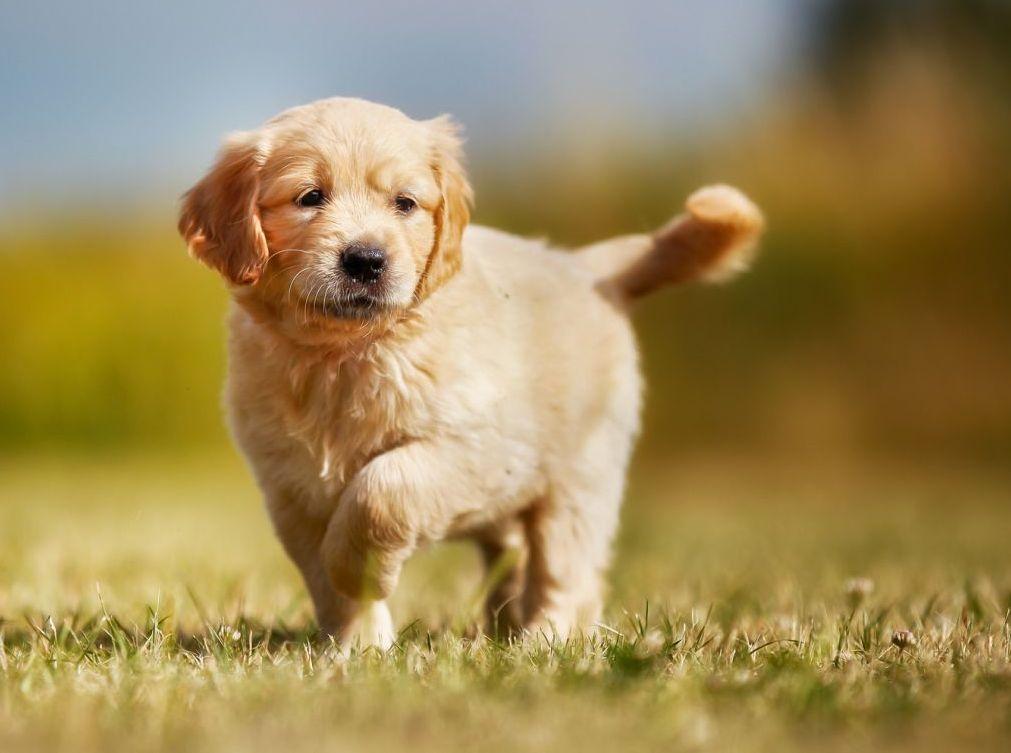 Почечные колики у собак