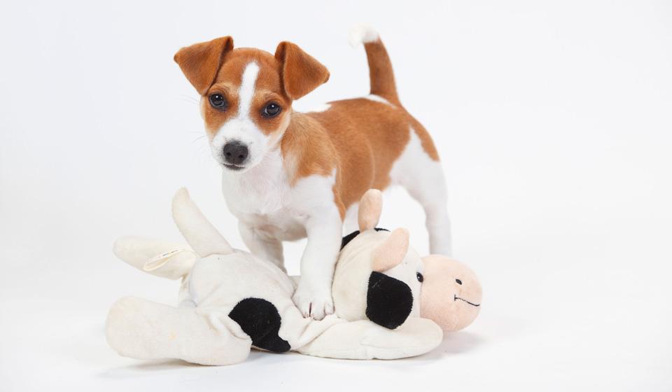 Тромбоэмболия у собак