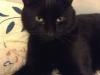 Дунаева Екатерина  (кот Оскар)