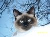 Ермакова Татьяна (кот Снегокот)