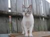 Крымкин Алексей (кот Яша)