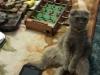 Макаркина Яна (кошка Бэсси)