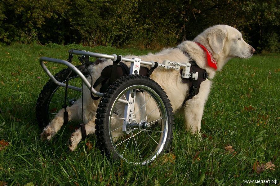 Инвалидные коляски для собак своими руками чертёж