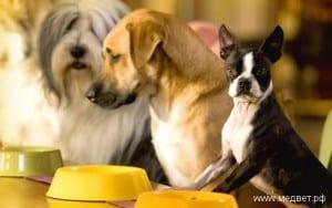 Заказ и доставка кормов для животных