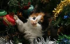 Опасности для кошек и собак в Новый год
