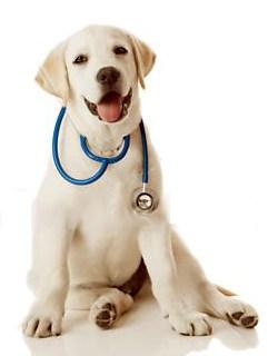 Прием у ветеринарного врача без животного