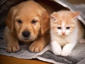 Запоры у кошек и собак