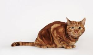 Хроническая почечная недостаточность у кошек и собак